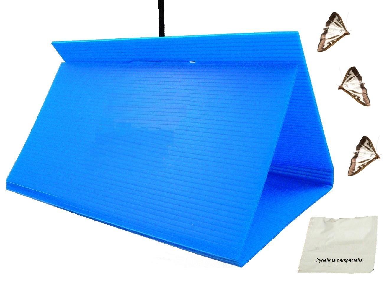 Glue pheromone trap - delta type for box three moth (cydalima perspectalis)