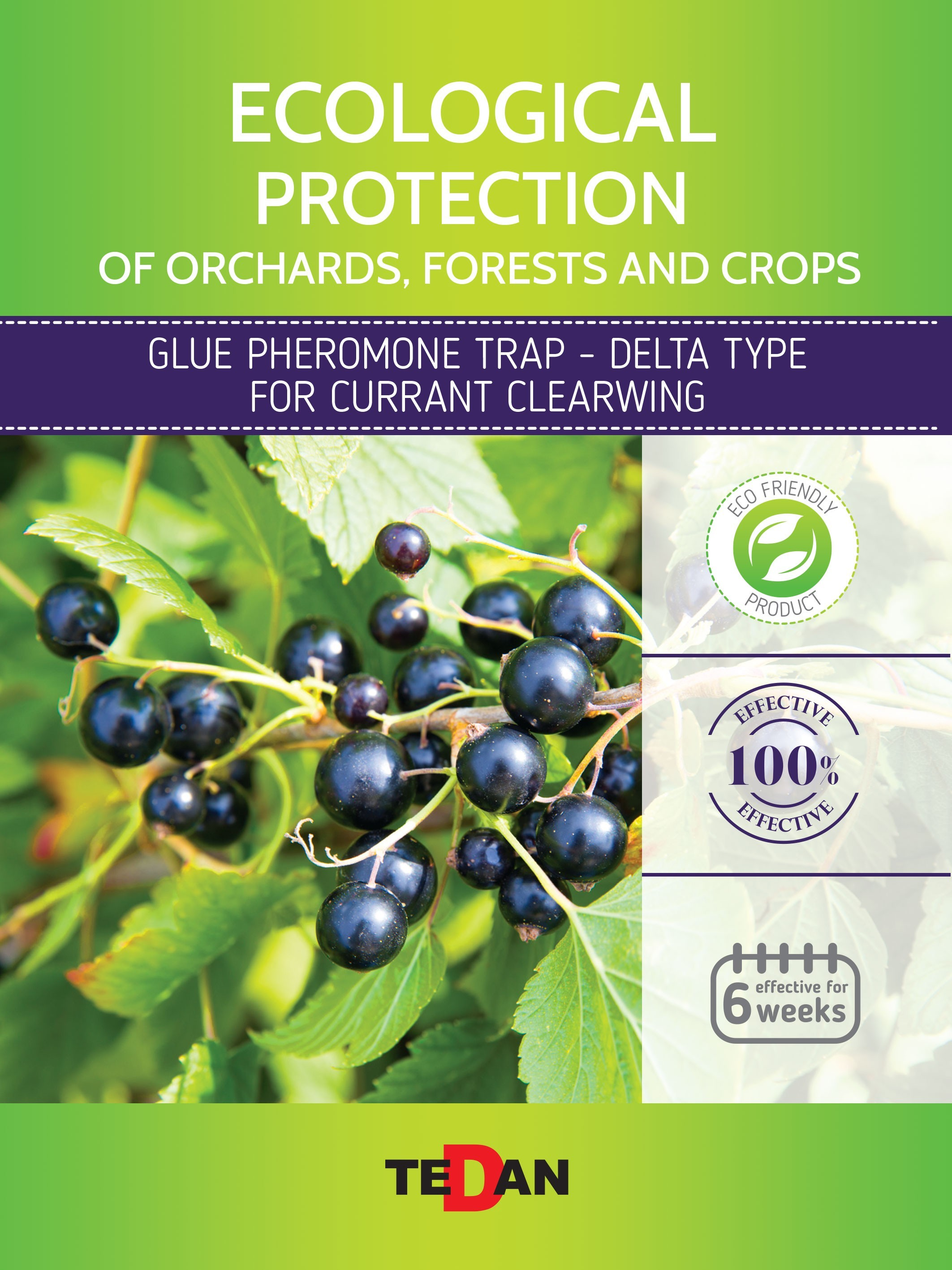 Glue pheromone trap - delta type for  currant clearwing (Synanthedon tipuliformis)