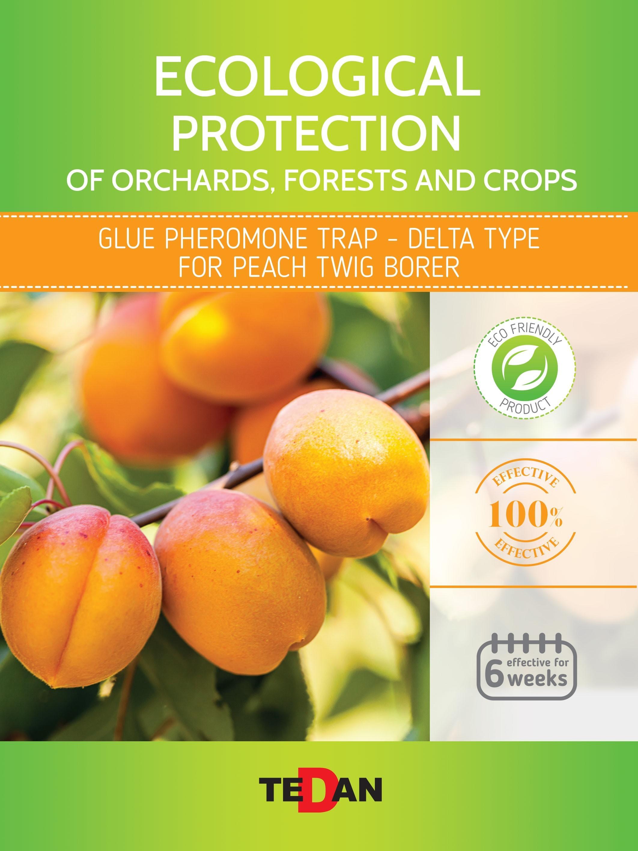 Glue pheromone trap - delta type for peach twig borer (Anarsia lineatella)