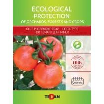 Glue pheromone trap - delta type for tomato leaf miner (tuta absoluta)