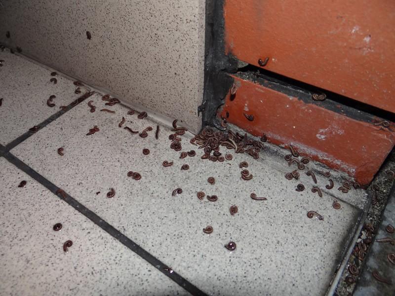 Millipedes, Centipedes - general informations